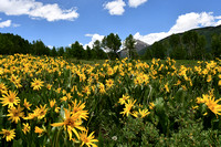 Meadow Gold- Crested Butte, Teresa Golden_8632