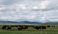Buffalo Home on the Range 6.10